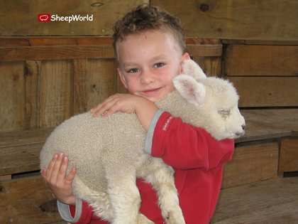 Sun, 17 Sep 2006: New Zealand, Spring, Sheepworld